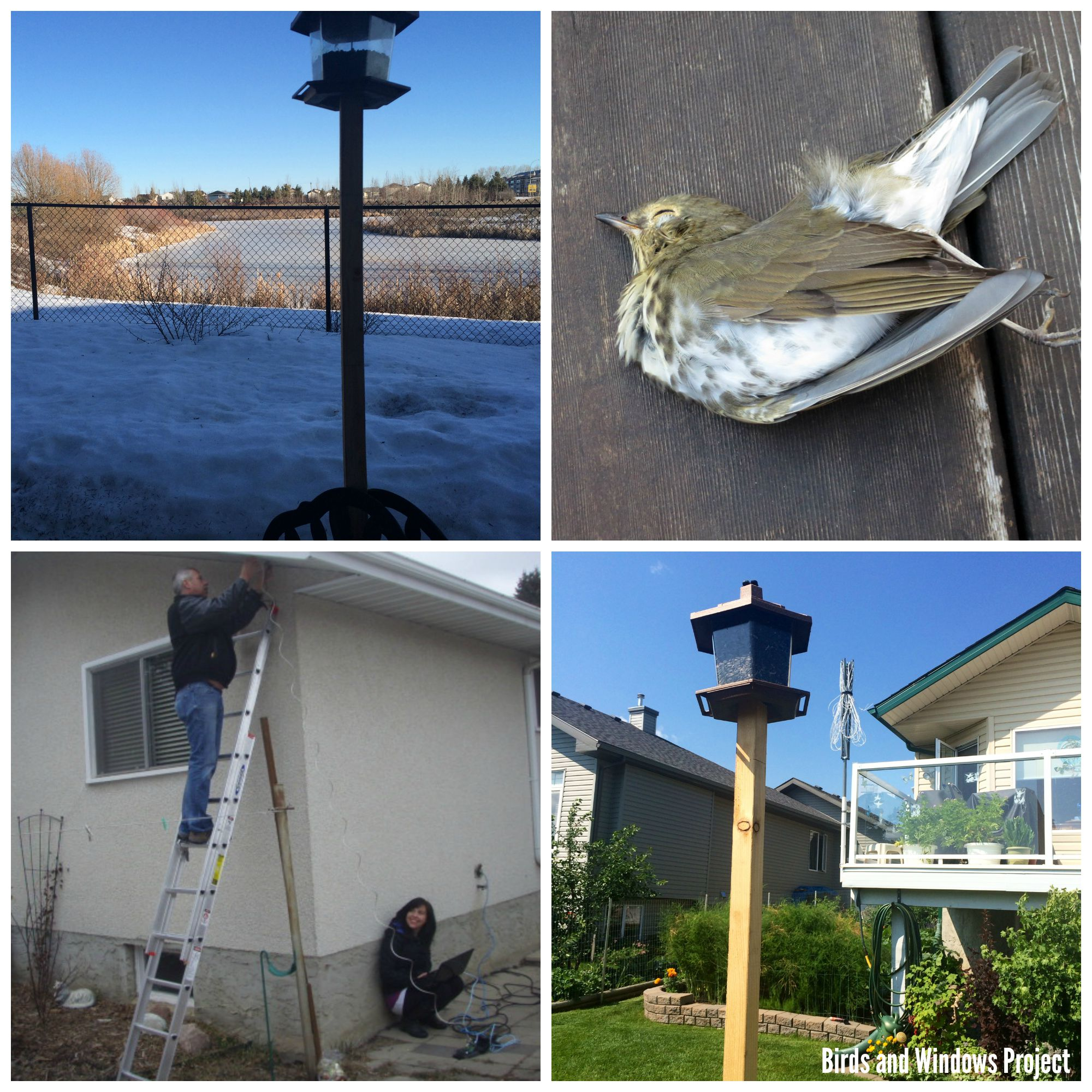 Bird Feeders 2