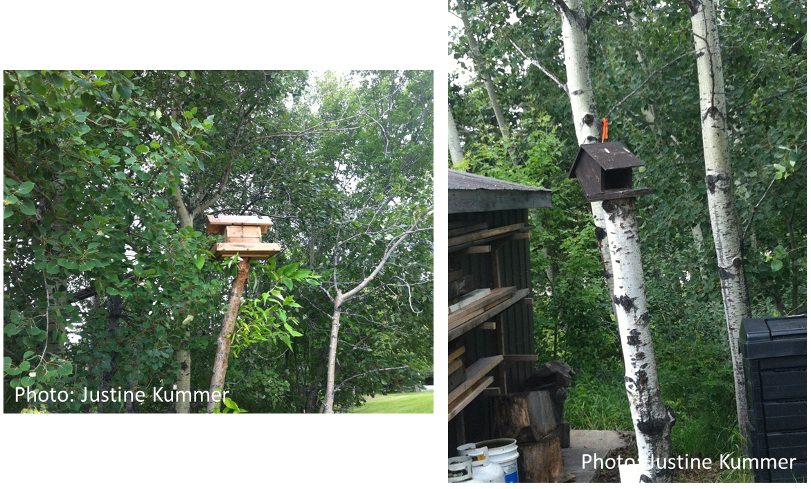 Bird feeders placed greater than 10 meters from a building.